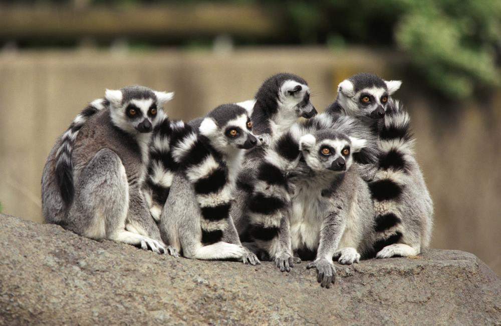 Wycieczki na Madagaskar