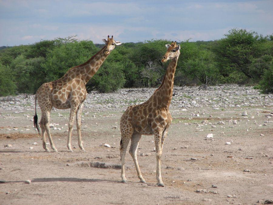 77 - NAMIBIA – BOTSWANA – ZIMBABWE – wyprawa do wodospadów Wiktorii