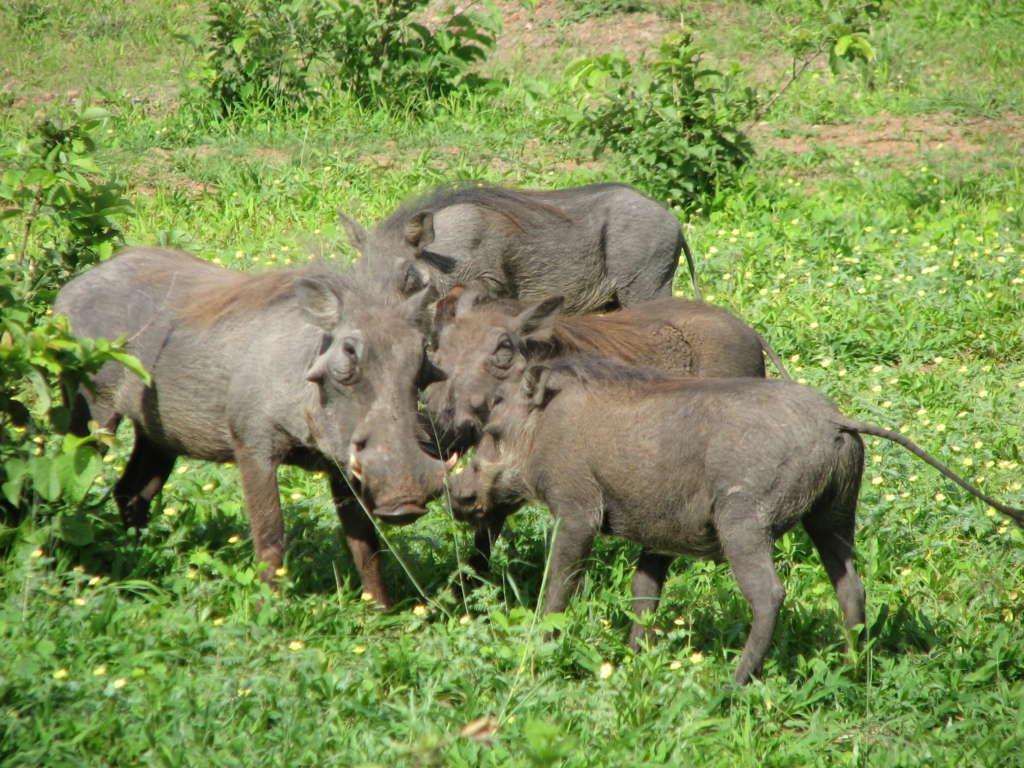 AFRYKA 2 685 1024x768 - NAMIBIA – BOTSWANA – ZIMBABWE – wyprawa do wodospadów Wiktorii