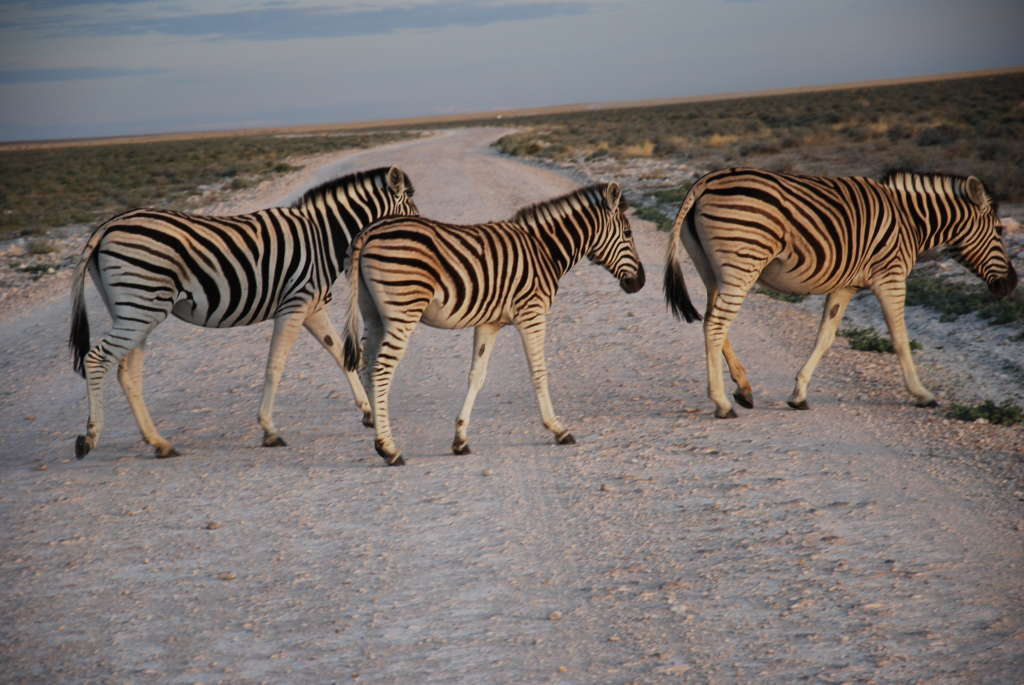 DSC 0308 1 1024x685 - NAMIBIA – BOTSWANA – ZIMBABWE – wyprawa do wodospadów Wiktorii