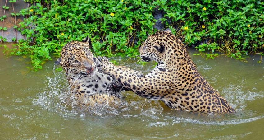 BRAZYLIA z Amazonią i Pantanalem - wyprawa