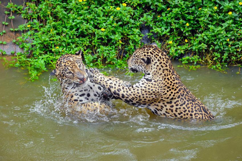 Fotolia 164757014 Subscription Monthly M - BRAZYLIA z Amazonią, Foz do Iguazu i Pantanalem - wycieczka