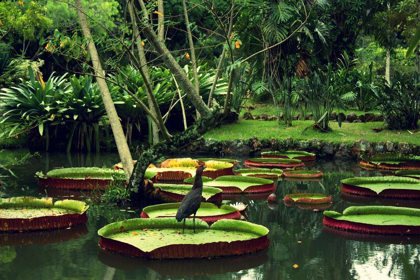 Fotolia 167430597 Subscription Monthly M - BRAZYLIA z Amazonią, Foz do Iguazu i Pantanalem - wycieczka