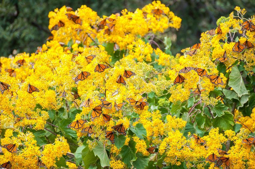 Fotolia 68782833 S - MEKSYK PÓŁNOCNY: Miedziany Kanion i motyle Monarcha - wyprawa na Festiwal Dia de los Muertos
