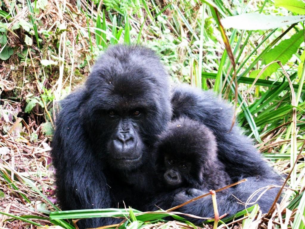 Rwanda August 2012 415 1024x768 - UGANDA – Perła Afryki