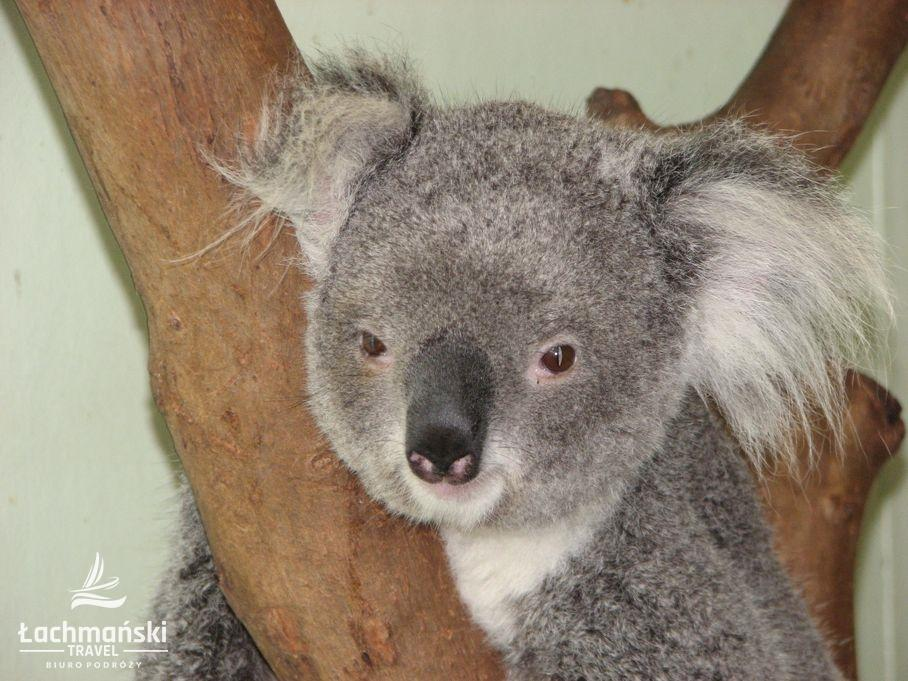 australia 38 - Australia - fotorelacja Bogusława Łachmańskiego