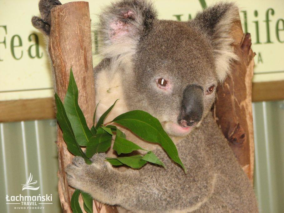 australia 39 - Australia - fotorelacja Bogusława Łachmańskiego