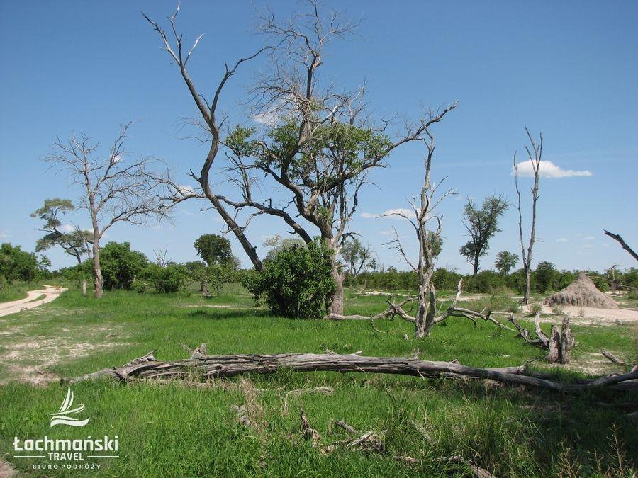 botswana 12 - Botswana - fotorelacja Bogusława Łachmańskiego