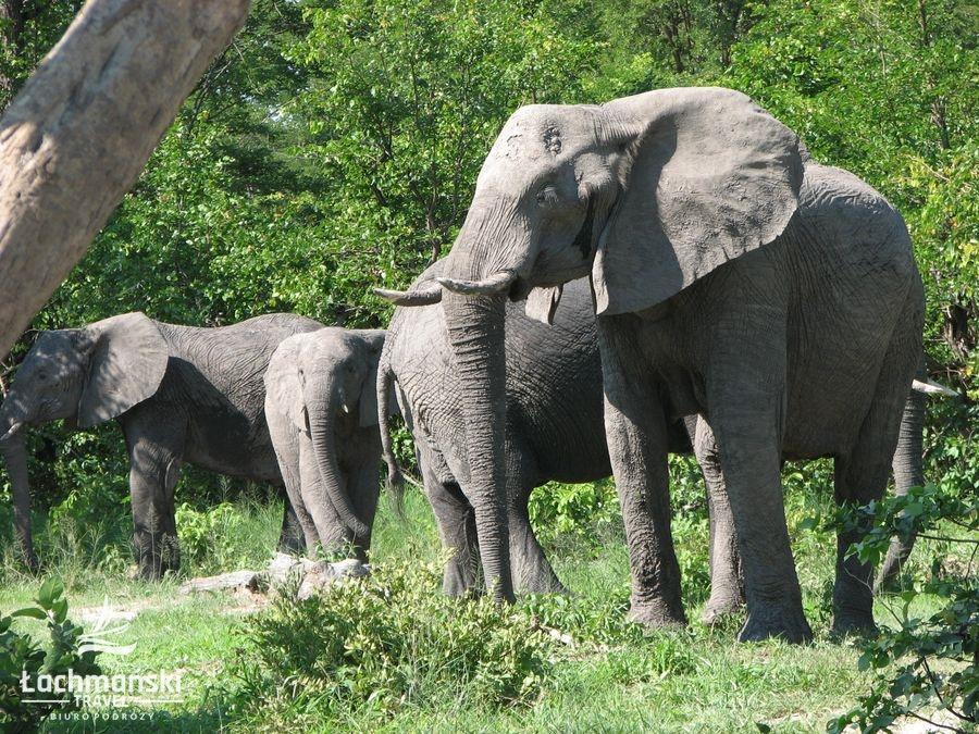 botswana 15 - Botswana - fotorelacja Bogusława Łachmańskiego