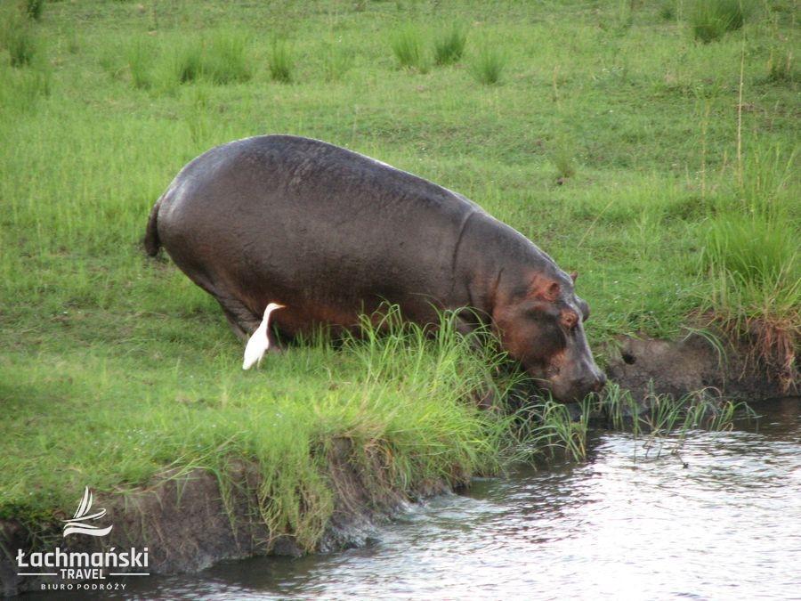 botswana 33 - Botswana - fotorelacja Bogusława Łachmańskiego