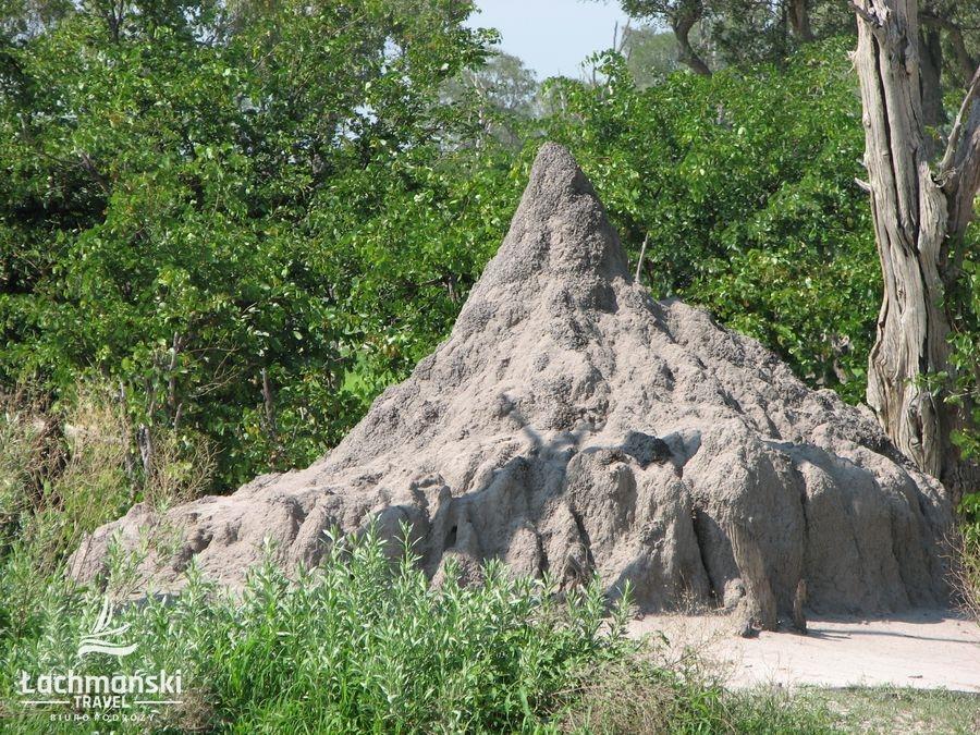 botswana 4 - Botswana - fotorelacja Bogusława Łachmańskiego