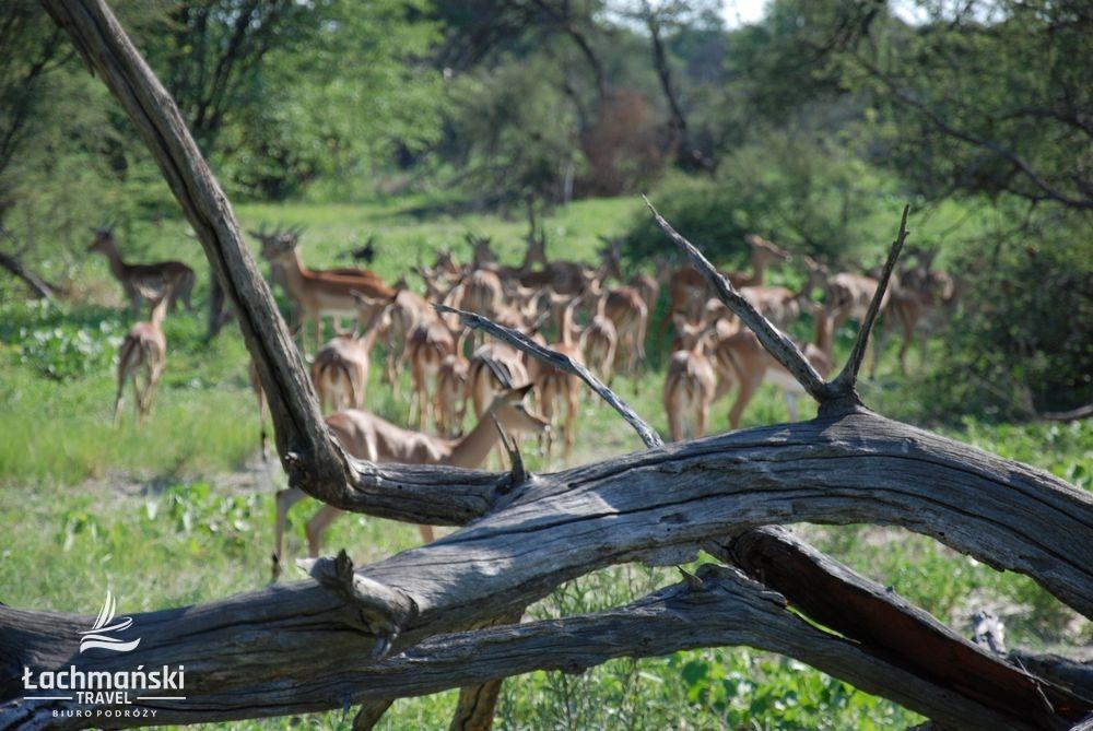 botswana 43 - Botswana - fotorelacja Bogusława Łachmańskiego