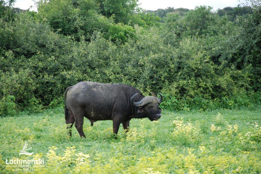 botswana 45 - Botswana - fotorelacja Bogusława Łachmańskiego