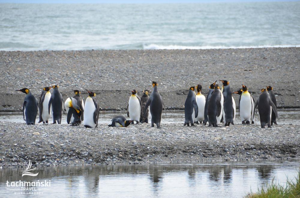 chile 18 - Chile: Patagonia - fotorelacja Bogusława Łachmańskiego