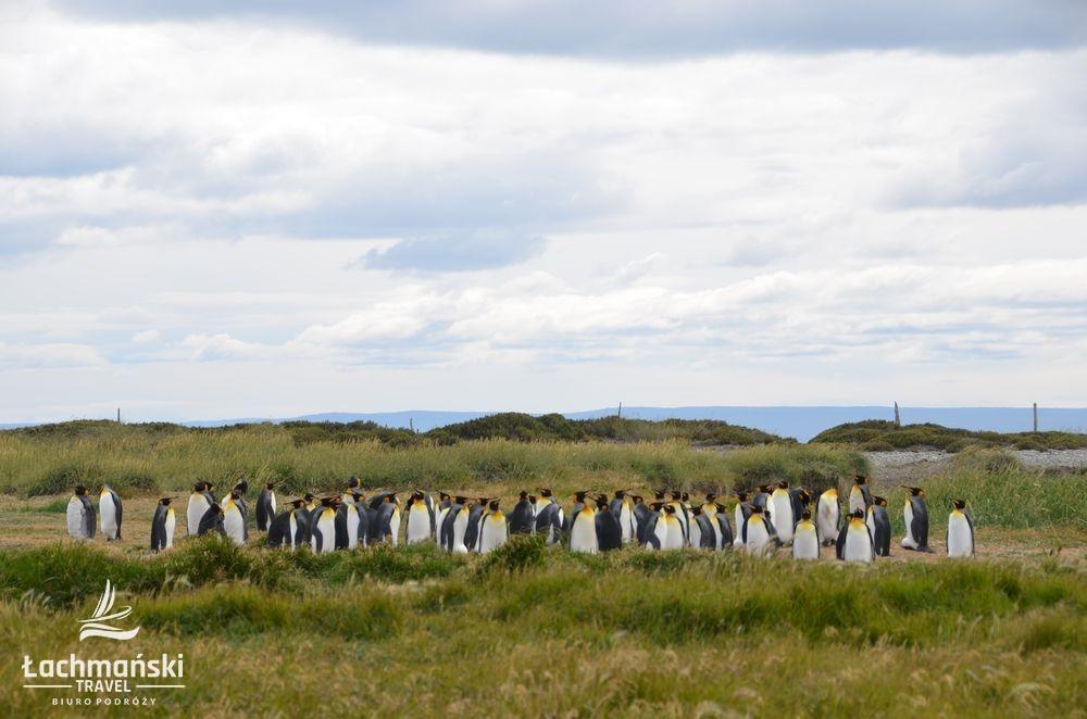 chile 21 - Chile: Patagonia - fotorelacja Bogusława Łachmańskiego
