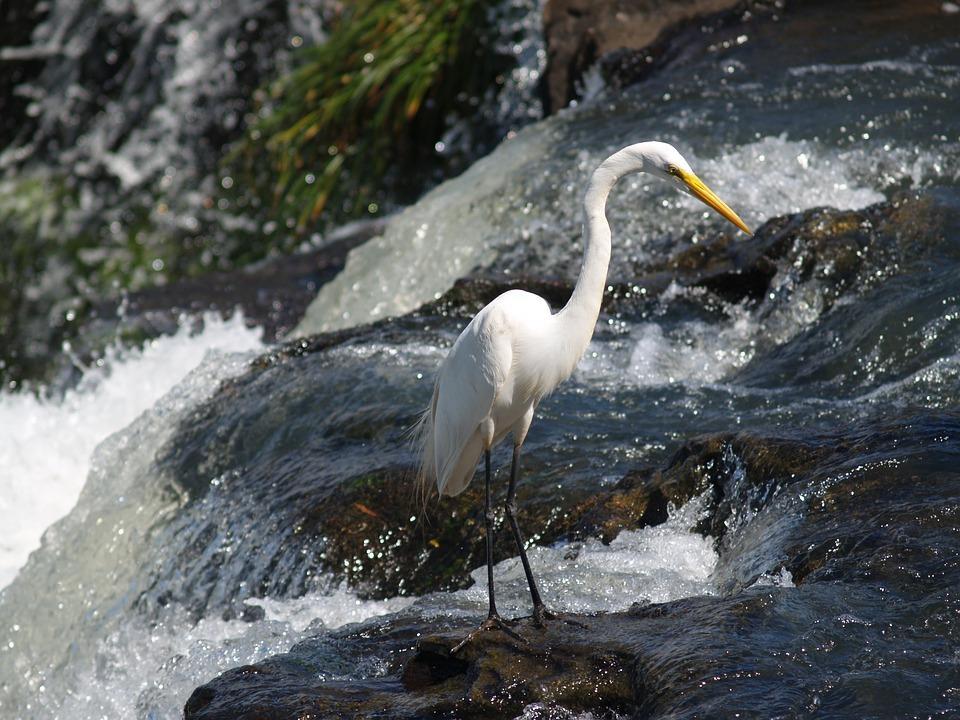 heron 2813775 960 720 - BRAZYLIA z Amazonią, Foz do Iguazu i Pantanalem - wycieczka