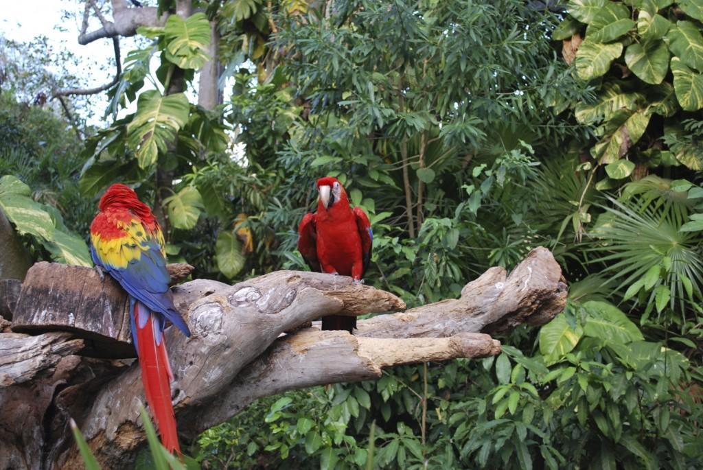 iStock 000009652277Medium 1 1024x685 - BRAZYLIA z Amazonią, Foz do Iguazu i Pantanalem - wycieczka