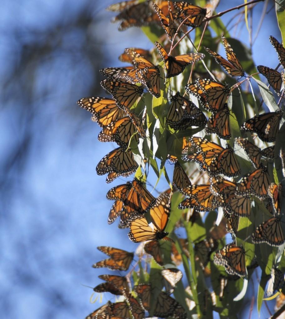 iStock 000054590226 Medium 915x1024 - MEKSYK PÓŁNOCNY: Miedziany Kanion i motyle Monarcha - wyprawa na Festiwal Dia de los Muertos