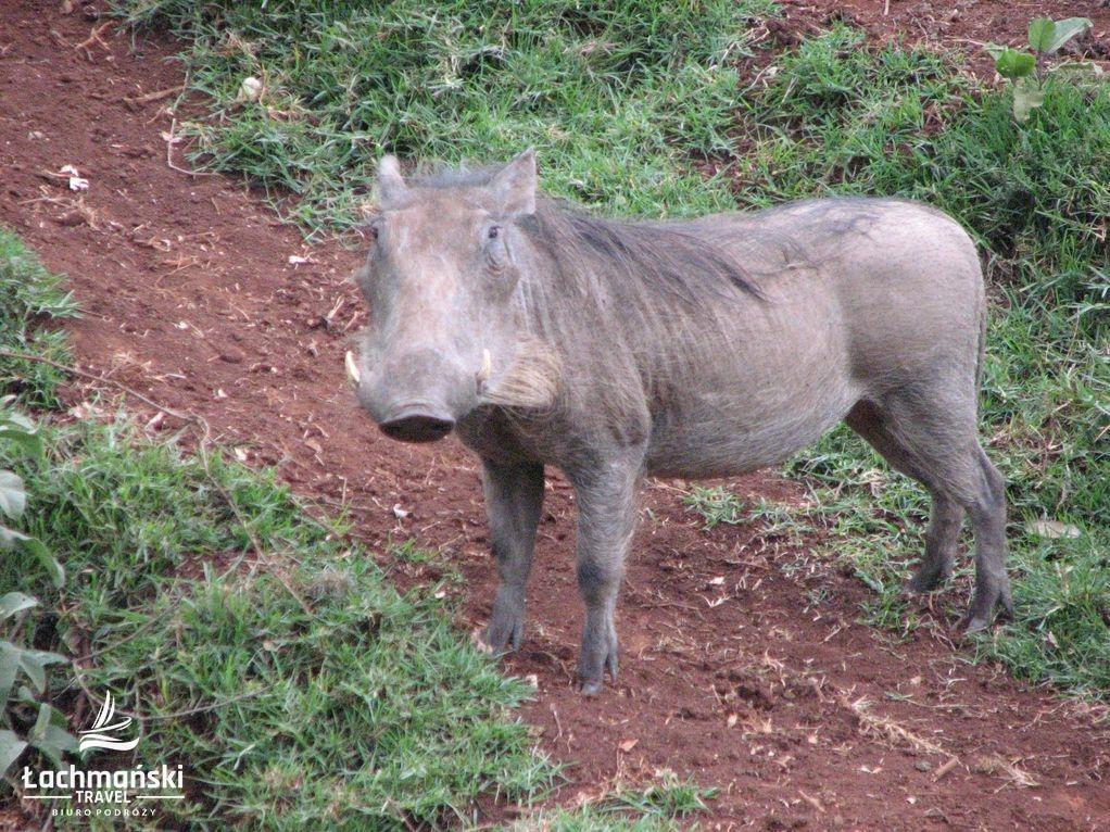 kenia 10 - Kenia - fotorelacja Bogusława Łachmańskiego