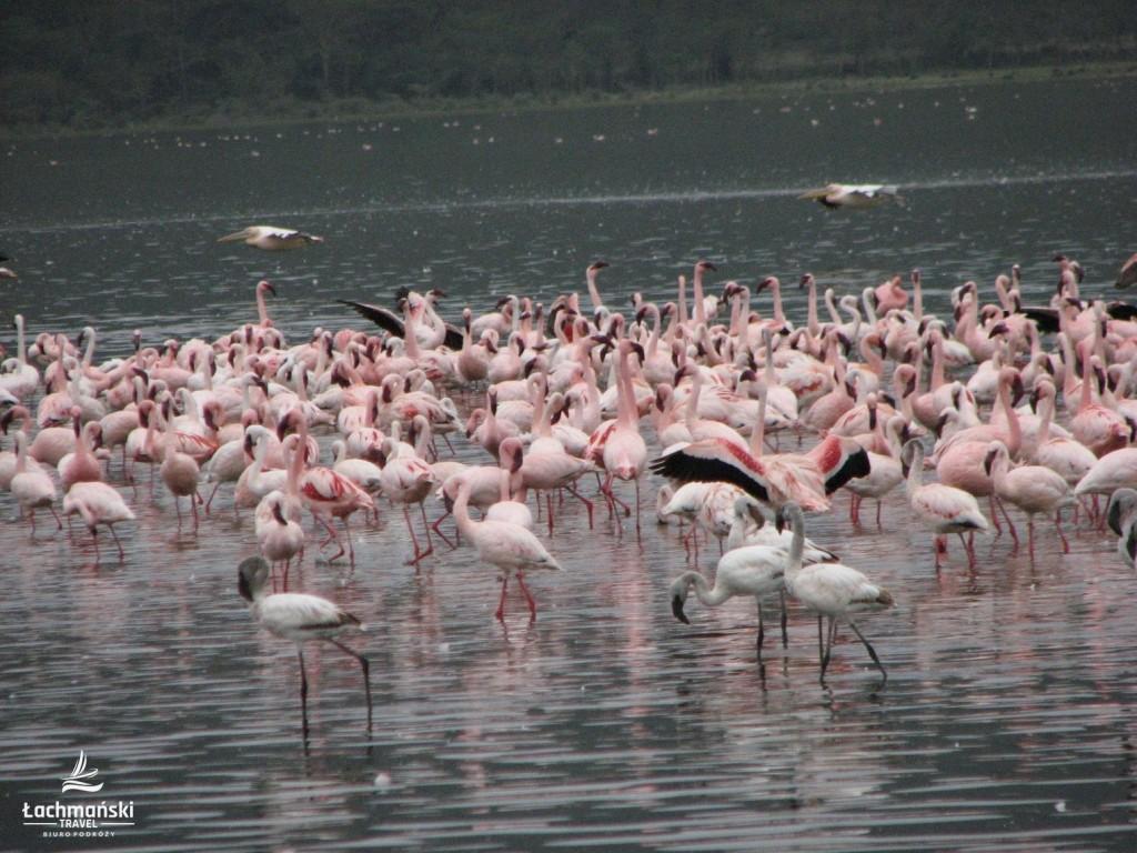 kenia 19 1024x768 - Kenia - fotorelacja Bogusława Łachmańskiego