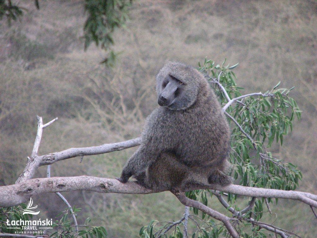 kenia 22 - Kenia - fotorelacja Bogusława Łachmańskiego