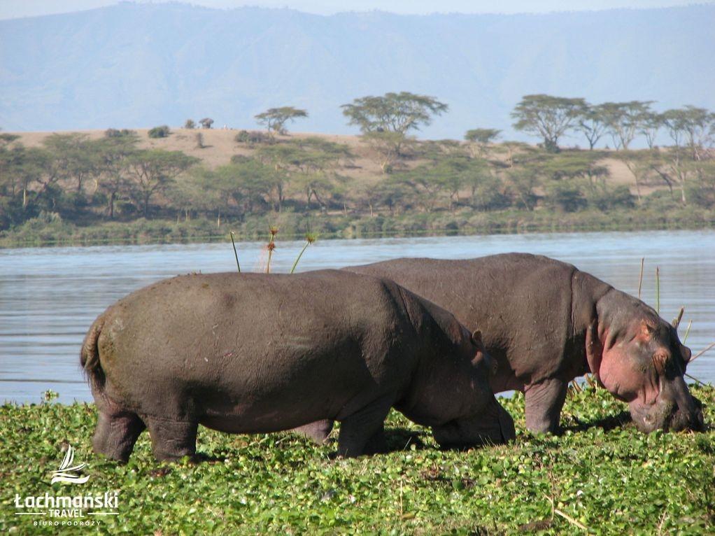 kenia 25 - Kenia - fotorelacja Bogusława Łachmańskiego