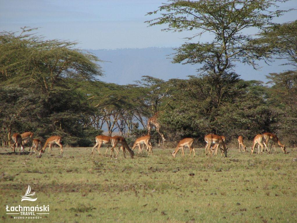 kenia 27 - Kenia - fotorelacja Bogusława Łachmańskiego
