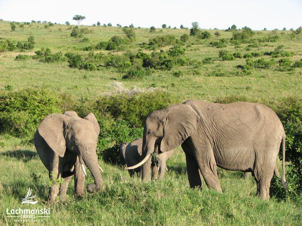 kenia 29 - Kenia - fotorelacja Bogusława Łachmańskiego