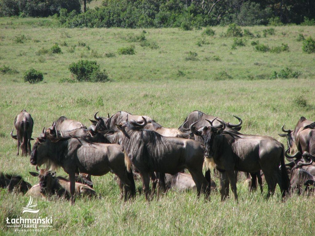 kenia 33 - Kenia - fotorelacja Bogusława Łachmańskiego