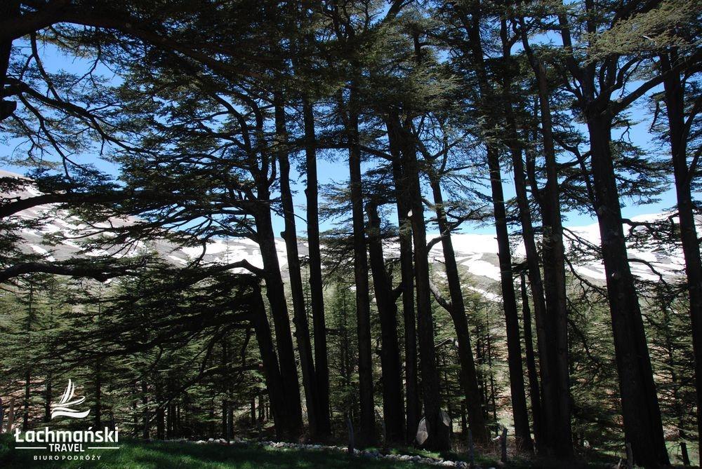 liban 38 - Liban - fotorelacja Bogusława Łachmańskiego