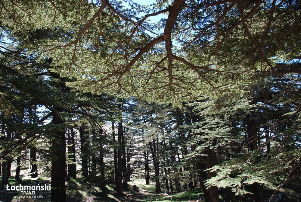 liban 40 - Liban - fotorelacja Bogusława Łachmańskiego