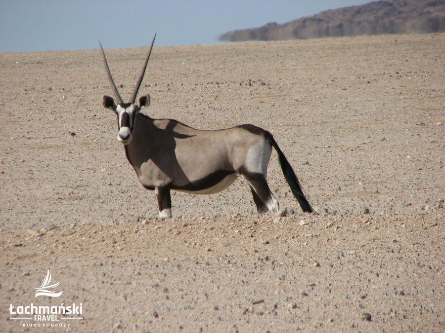 namibia 14 - Namibia - fotorelacja Bogusława Łachmańskiego