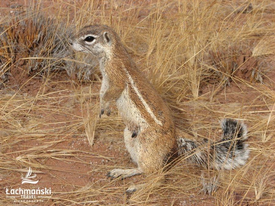 namibia 35 - Namibia - fotorelacja Bogusława Łachmańskiego