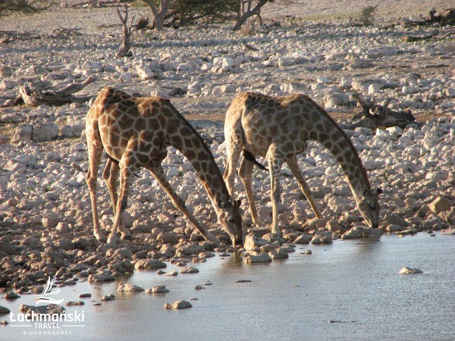 namibia 48 - Namibia - fotorelacja Bogusława Łachmańskiego