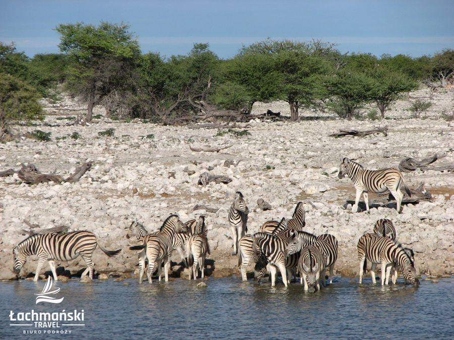 namibia 49 - Namibia - fotorelacja Bogusława Łachmańskiego
