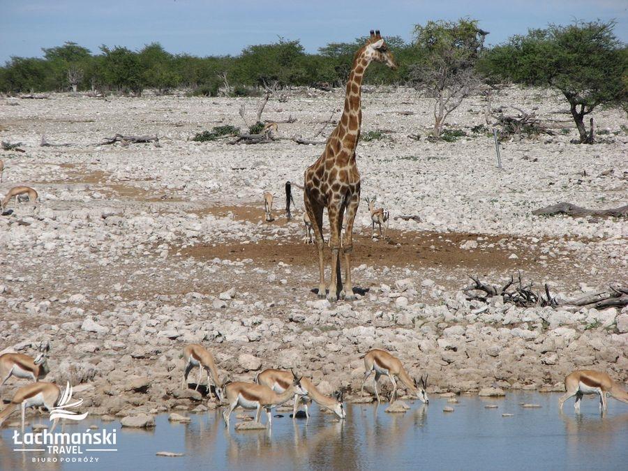 namibia 50 - Namibia - fotorelacja Bogusława Łachmańskiego
