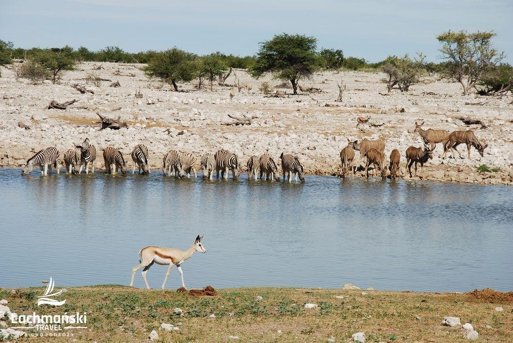 namibia 52 - Namibia - fotorelacja Bogusława Łachmańskiego