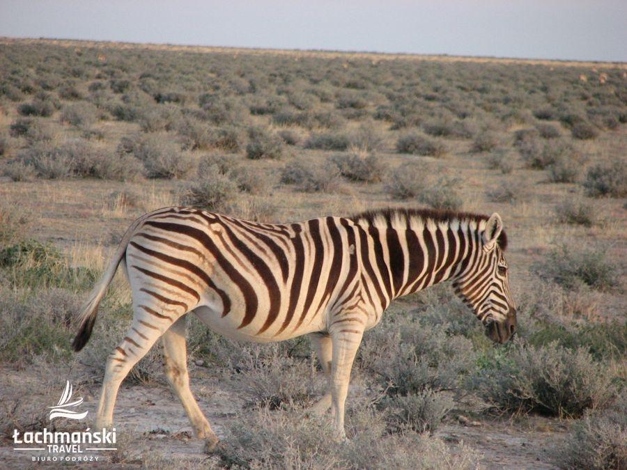 namibia 55 - Namibia - fotorelacja Bogusława Łachmańskiego