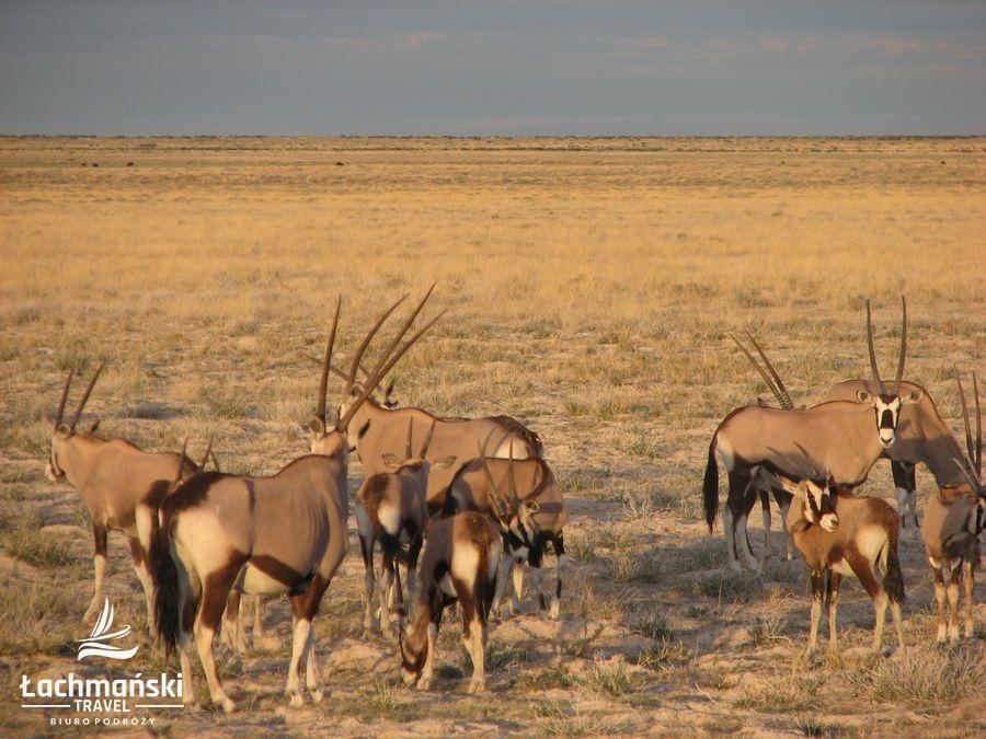 namibia 56 - Namibia - fotorelacja Bogusława Łachmańskiego