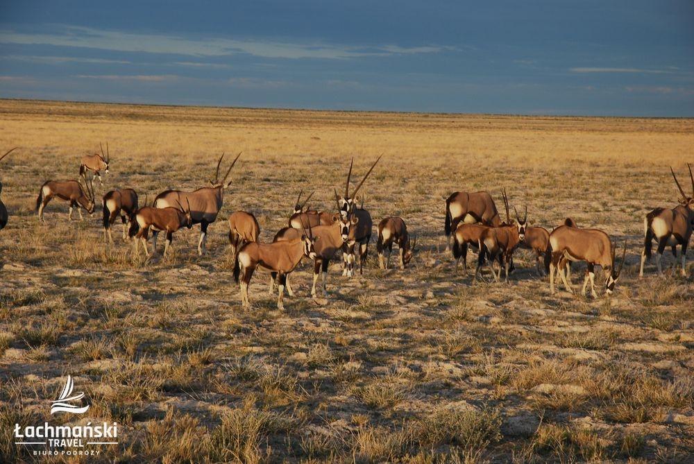 namibia 57 - Namibia - fotorelacja Bogusława Łachmańskiego