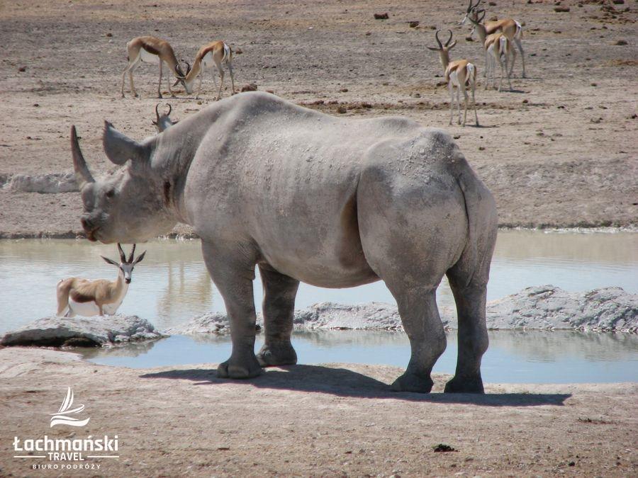 namibia 59 - Namibia - fotorelacja Bogusława Łachmańskiego