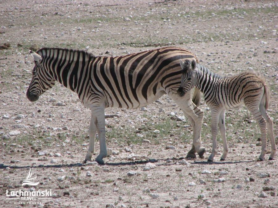 namibia 60 - Namibia - fotorelacja Bogusława Łachmańskiego