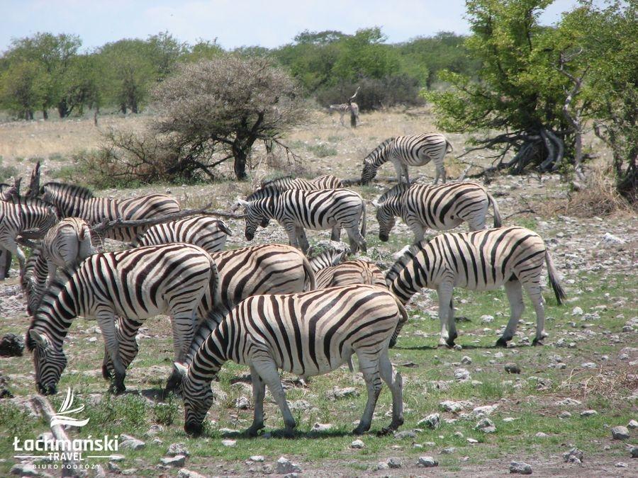 namibia 63 - Namibia - fotorelacja Bogusława Łachmańskiego