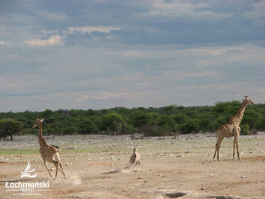 namibia 71 - Namibia - fotorelacja Bogusława Łachmańskiego