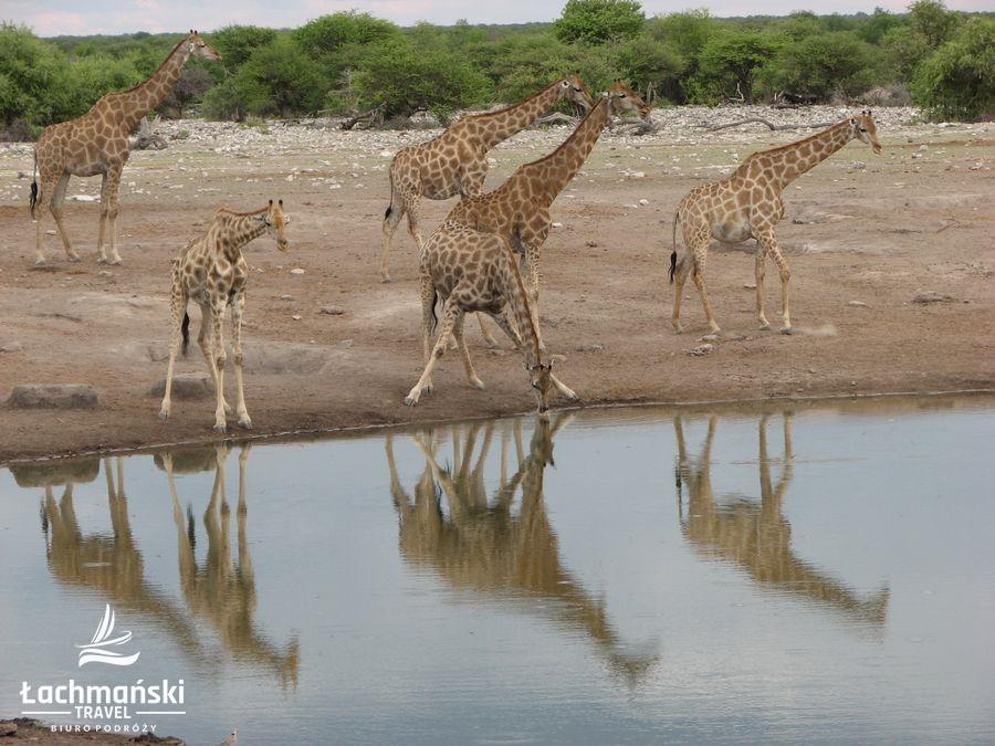 namibia 73 - Namibia - fotorelacja Bogusława Łachmańskiego