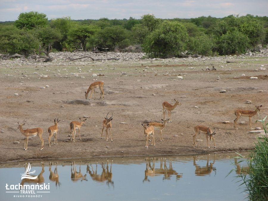 namibia 74 - Namibia - fotorelacja Bogusława Łachmańskiego