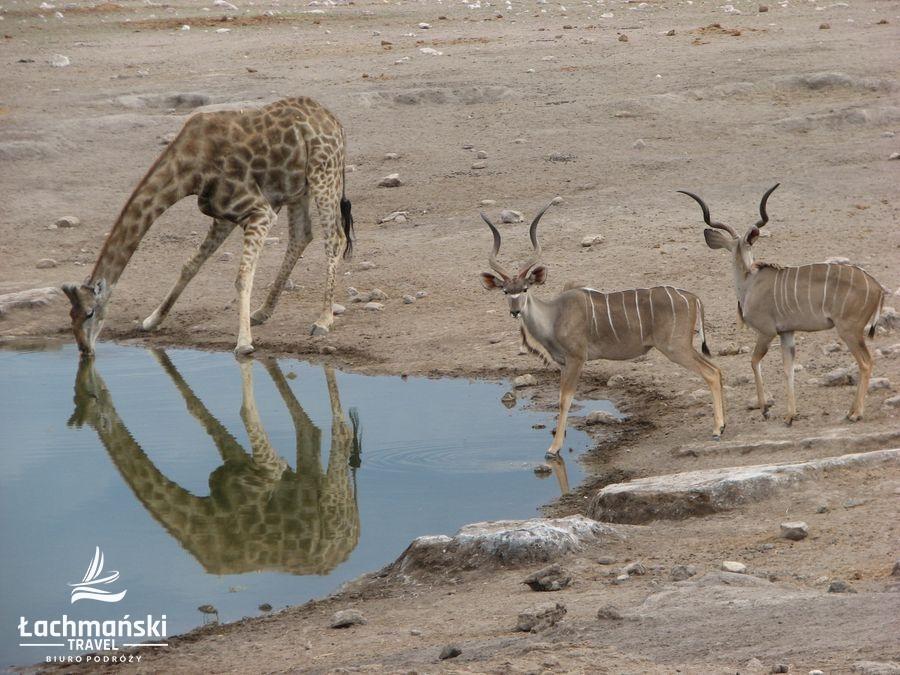 namibia 76 - Namibia - fotorelacja Bogusława Łachmańskiego