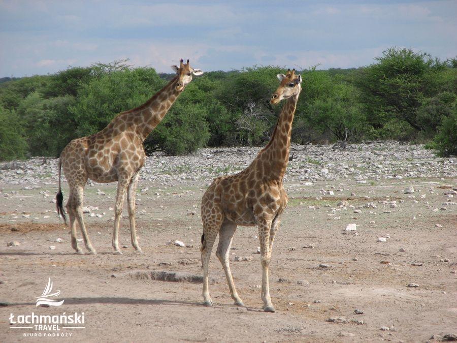 namibia 77 - Namibia - fotorelacja Bogusława Łachmańskiego