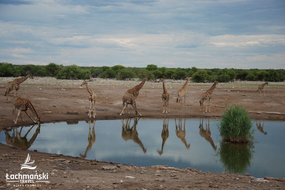 namibia 78 - Namibia - fotorelacja Bogusława Łachmańskiego