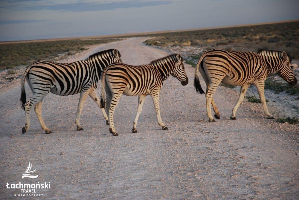 namibia 89 - Namibia - fotorelacja Bogusława Łachmańskiego